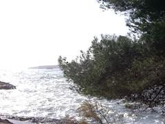20100101CapdAny2010aPortocolom (69) por arcverd