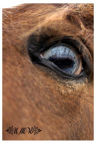 18/365 Horse eye