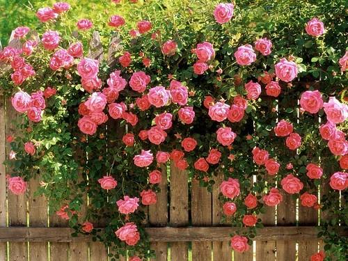Feliz Quinta Flower!!!! by Maria Sica