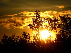 Happy Sunset Wednesday! Feliz Quarta Sunset! (peggyhr) Tags: trees sunset sky orange brown sun white canada black yellow clouds amber niceshot silhouettes showroom soe musictomyeyes finegold fqs topshots 25faves colorphotoaward peggyhr flickrbronzeaward heartawards bluebirdestates shiningstar peaceawards thebestshot 100commentgroup doubledragonawards flickraward visionaryartsgallery albertya sunsetlovers bestpeopleschoice mygearandme naturespotofgoldlevel1 level1photographyforrecreation quartasunsetsunsetwednesday blinkagainforinterestingimages theworldinthemyeyes p1450153ap myphotographworld