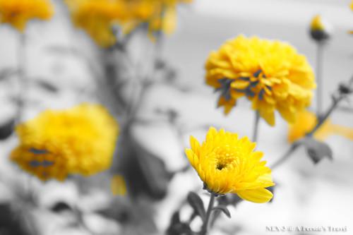 NEX_Color_Filters_PartY_NO1