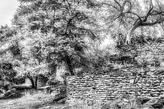Walls And Trees (Daniela 59) Tags: walls wallwednesday 100xthe2017edition 100x2017 image11100 theworldaroundme trees nature outdoor derelict abandoned daanviljoengamepark namibia blackandwhite monochrome danielaruppel