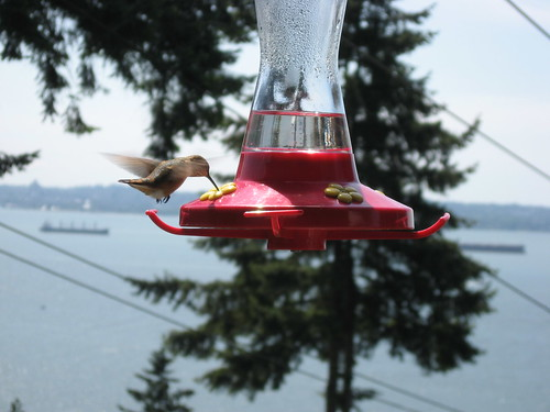 Hummingbird, Vancouver in Background by you.