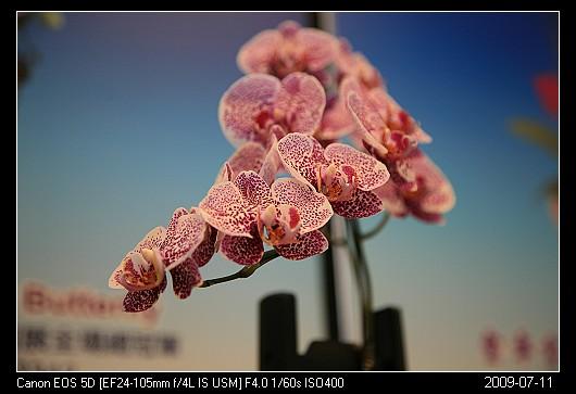 20090711_30礁溪金車蘭花園