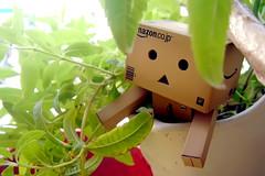 In the jungle (C.L.I.W) Tags: plant cute japan toy robot leaf pot jungle trance  danbo danboard   amazoncomjp