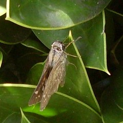 Grass skipper on green
