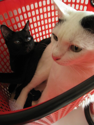 Cats in a (laundry) basket