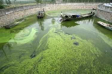 Algae Bio-Fuel