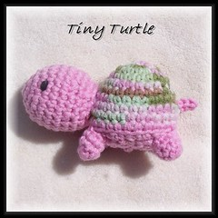 Dawn's tiny turtle