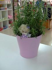 Prenda que ganhamos lá na Talismã| (Irene Sarranheira) Tags: plantas lavanda alfazema aromaticas