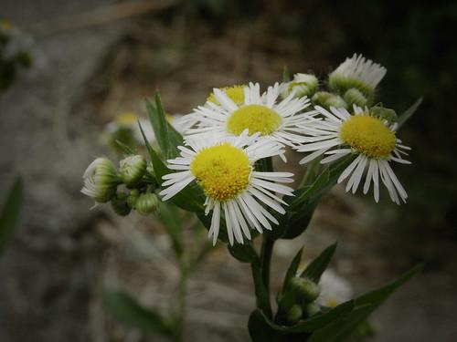 Flower-066-1