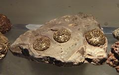 ggregati sferoidali di pirite a piccoli cristalli pseudocubici su calcare provenienti da lla zona di sasso simone RN