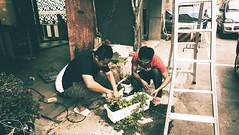 美術館生活-種盆栽