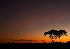 (ssj_george) Tags: leica sunset red sky orange sun tree nature colors silhouette yellow night clouds plane dark airplane landscape lumix evening airport still movement purple sundown wind tripod cyprus mosque line panasonic sultan tekke 1001nights cami haram hala hum larnaca nighshot superaplus aplusphoto   fz38 fz35 ssjgeorge