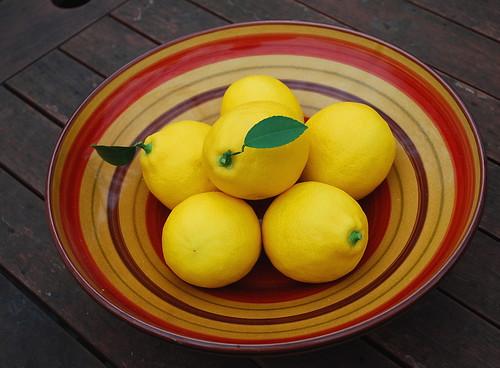 meyer lemon harvest