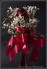 Dried rose (alohadave) Tags: flower rose effects iso200 pentax flash super sweep tabletop 34mm f130 0006sec k100d pentaxk100dsuper smcpda1645mmf40edal pt04tm sunpakauto120jttl