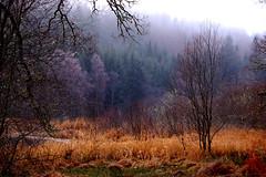 Loch Ard (Gordon McKinlay) Tags: winter d50 scotland nikon december dslr 2009 lochard kinlochard gordonmckinlay gordonsramblings gmckinlay