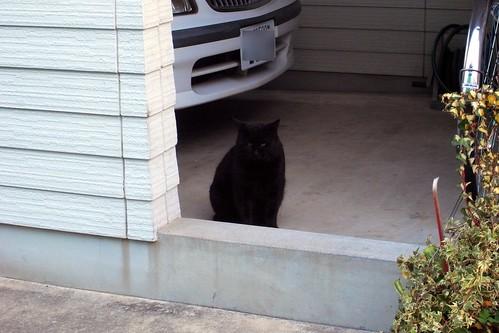 Today's Cat@20091213