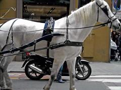 Firenze (Babj) Tags: horse coach gig firenze toscana carrozza cavallo calesse