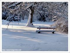 Winter's fable / Téli mese II. (FuNS0f7) Tags: winter snow sunshine hungary sonycybershotdscf828 gödöllő yourwonderland