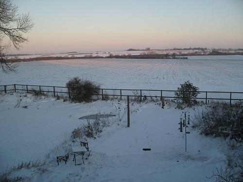 The snowy garden