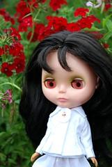 wild flower Mina