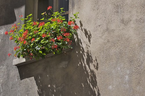 Paris Window box inspiration: Red