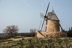 Villeneuve-Minervois (Aude) (PierreG_09) Tags: villeneuveminervois aude moulin amandier vigne occitanie languedocroussillon