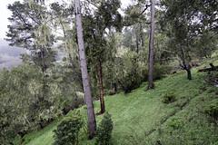 WetForest I (Joe Josephs: 3,122,834 views - thank you) Tags: california californialandscape joejosephs landscapes pacificcoasthighway californiabeaches fineartphotography fog foggy landscapephotography outdoorphotography pacificocean ©joejosephs2017 forests forest trees rain rainyweather