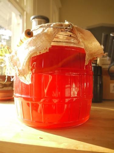 cranberry kombucha ii