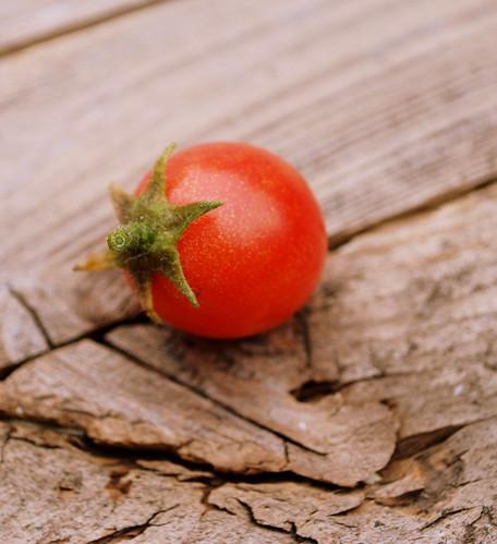 one lone tomato