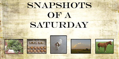 snapshots-of-a-saturday5