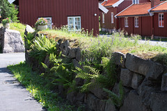 Mur (fotomormor) Tags: mur stein vinduer ringerike bregner rdt krokskogen kleivstua krokkleiva