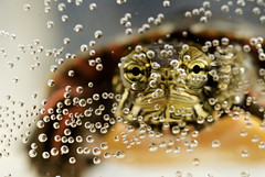alien lifeform. (Vitaliy P.) Tags: macro water project big eyes nikon tank turtle reptile air alien under bubbles explore year2 365 60mm monty month4 project365 explored d40x vitaliyp gettysubmitted
