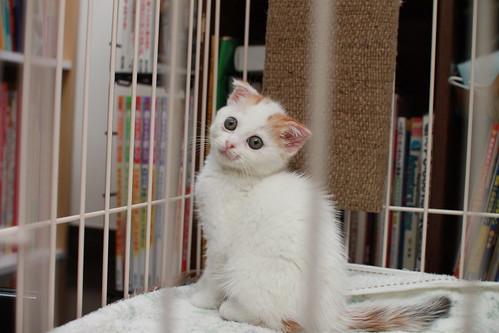 三毛ネコですわ