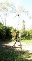 Golden orb-web spider (Nephila clavipes fasciculata) ....... ARAÑA TEJEDORA  DORADA ~ Original = (1732 x 3305) (turdusprosopis) Tags: arthropoda araignée arachnida spinnen araneae tetragnathidae nephila bananaspider nephilaclavipes araneomorphae giantwoodspider araneoidea nephilidae 蛛形綱 goldensilkorbweavers genusnephila spinachtigen faunaargentina seidenspinnen spinnenart faunadelaargentina faunadeargentina animalsofargentina animalesdelaargentina animalesargentinos animalesdeargentina arácnidosargentinos arácnidosdelaargentina arañasargentinas arañasdelaargentina arañasdeargentina arácnidosdeargentina aranhasbrasileiras strekspinnen imágenesdearañas aranhasdobrasil arañasdeluruguay arañasdeuruguay arañasuruguayas arañasdelparaguay arañasdeparaguay arañasparaguayas spidersofnorthamerica spidersofsouthamerica arachnidstubs goldeneseidenspinne nephilaclavipesfasciculata goldenorbweaversspider 芥蛛科 néphiles 斑絡新婦 大木林蛛