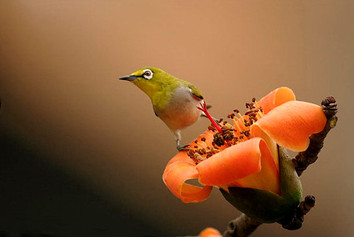 3811270144 b234c4e7a8 Beautiful Birds   The Splash of Colors!!!