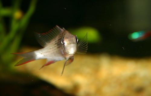 fishportrait