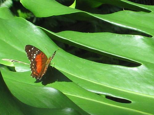 Butterfly Garden 061