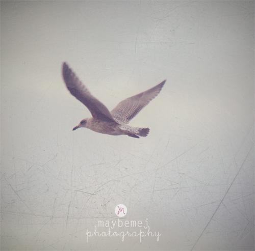 varbergbird
