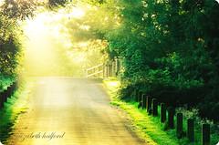 Lemon Freshrise ({EHPhoto}) Tags: road sun forest sunrise woods shining