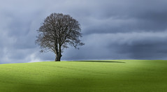 A Patch of Sunlight on a Dark Day (wentloog) Tags: uk sky cloud sunlight tree wales canon eos interestingness gallery britain cymru cardiff explore caerdydd fields 5d lonely wfc canoneos5d wentloog welshflickrcymru stevegarrington world100f michaelstoneyfedw