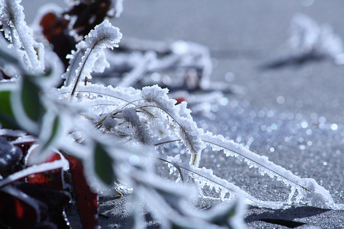 morning frost - 2
