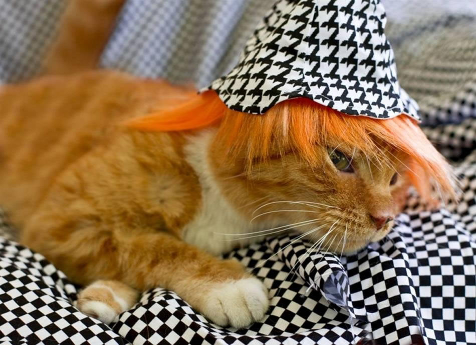 cat-glamour-07