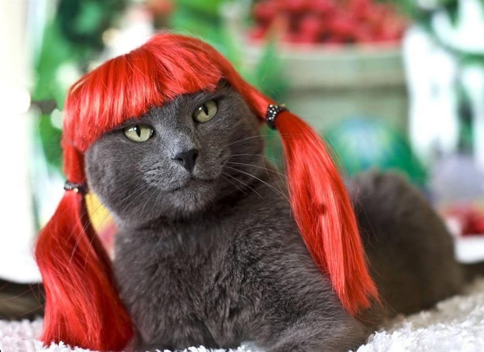 cat-glamour-05