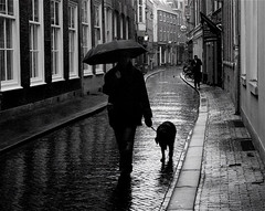 UMBRELLA DAY (Akbar Simonse) Tags: street people urban dog man holland reflection netherlands rain umbrella candid streetphotography denhaag x thehague paraplu streetshot straat weerspiegeling reflectie straatfotografie straatfoto hondenweer dedoka 200000000stagelovers akbarsimonse