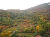vista sulla collina d'autunno