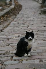 2009-11-21-PARIS-PereLachaiseCemeterie32-cat1
