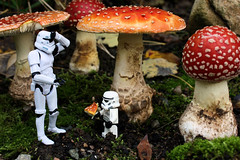 The Alice in Wonderland Syndrome (Stfan) Tags: autumn nature mushroom automne toy actionfigure starwars transformation lego small stormtroopers grand size eatme stormtrooper tall figurine wonderland jouet legostarwars champignon vegetal hasbro petit aliceinwonderland flyagaric taille amanite stormtroopers365