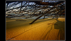 entwined and swallowed (:Timmay!:) Tags: tree beach coast sand fallen 1022 quicksand kingscliff timlashbrookphotography kscceoy ksccmeritjan202010print wwwtimlashbrookphotographycomau
